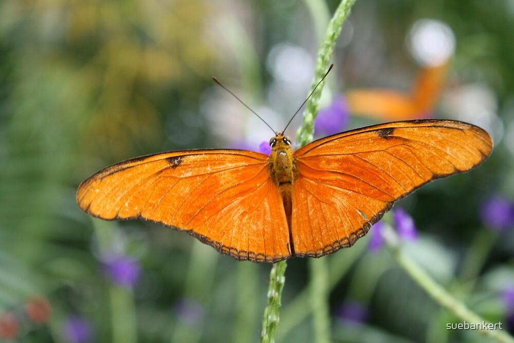 Orange Butterfly by suebankert