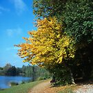 Yellow leaves by the lake by Urban Hafner