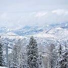 Colorado Rockies by Ryan Davison Crisp