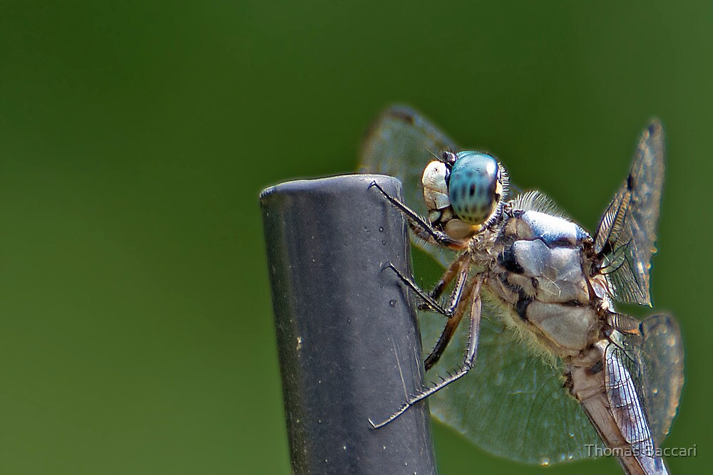 Dragonfly Up Real Close by TJ Baccari Photography