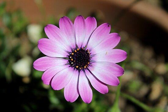 Purple Flower by Lillie Halton