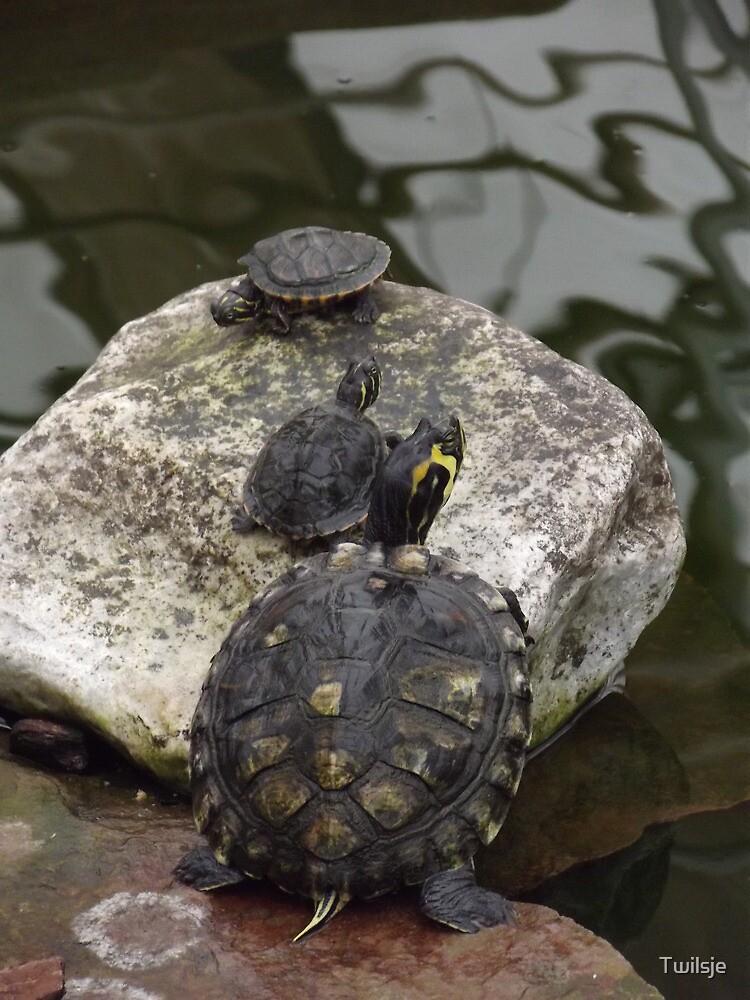 The turtles. by Twilsje