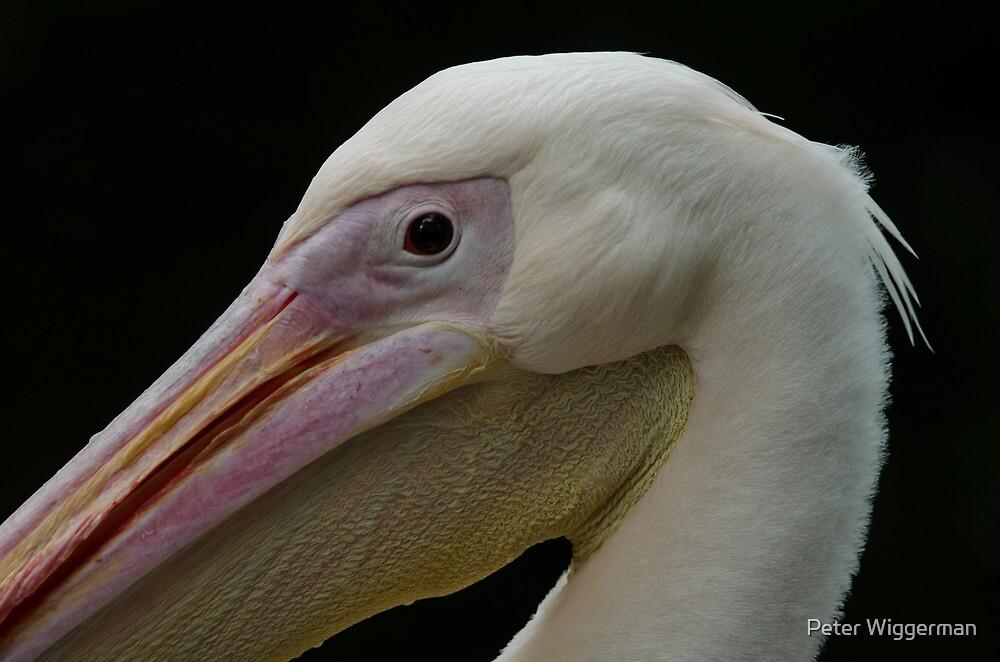 Pelican by Peter Wiggerman