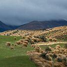 Red Tussock Grass Reserve by Barbara Burkhardt