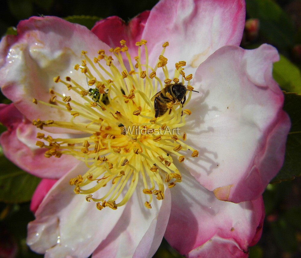 Bee With Ladybug Company by WildestArt