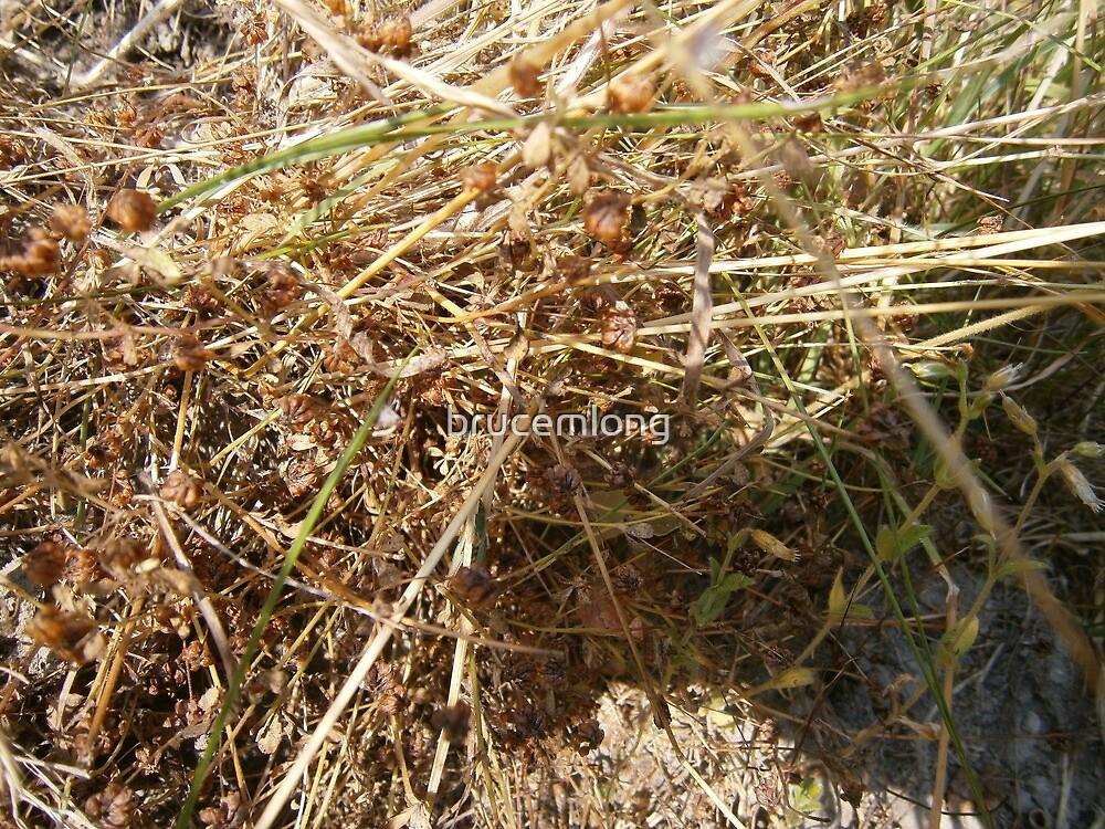 grasshopper by brucemlong
