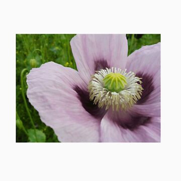 flower by jenkaz