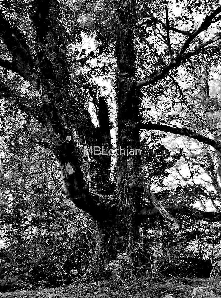BW Tree by MBLothian