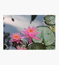 Water lilies, Kenilworth Aquatic Gardens Photographic Print