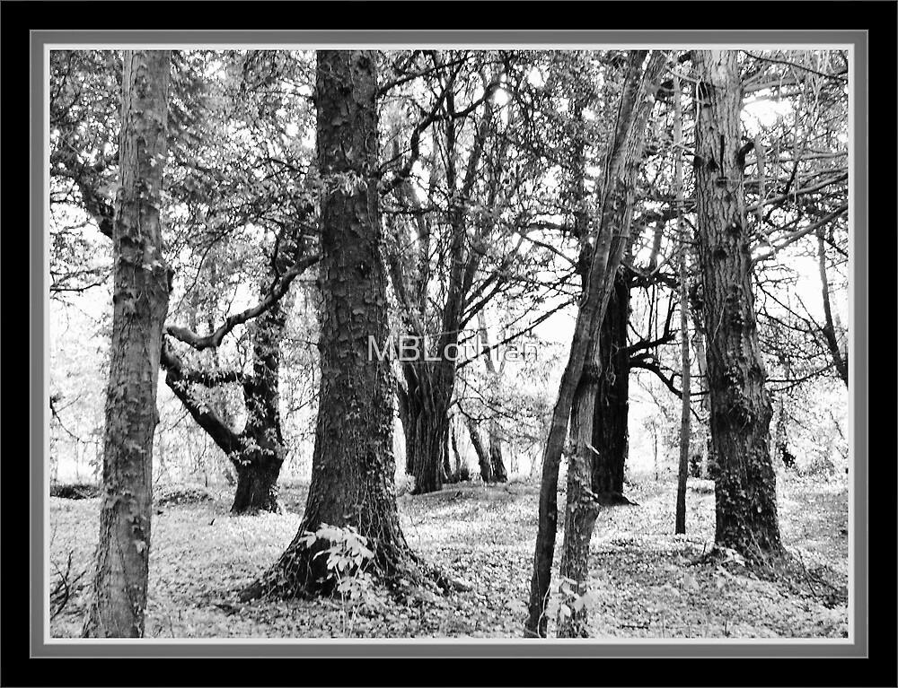 Trees black & white by MBLothian