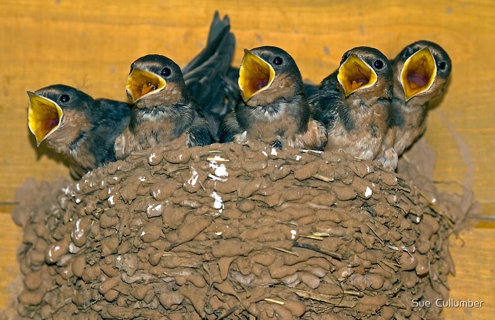 The Choir by Sue  Cullumber