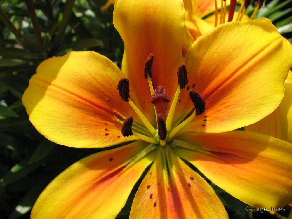 Sunlit Orange and Gold Lily - Macro Untouched by Kathryn Jones
