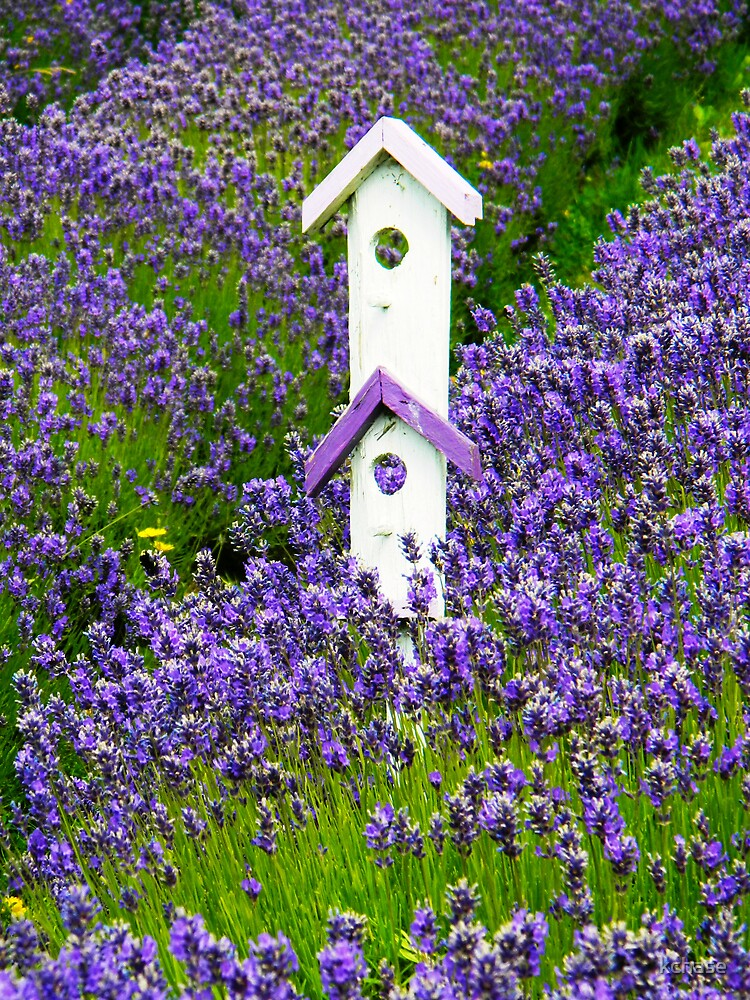 Lavender Birdhouse 1 by kchase