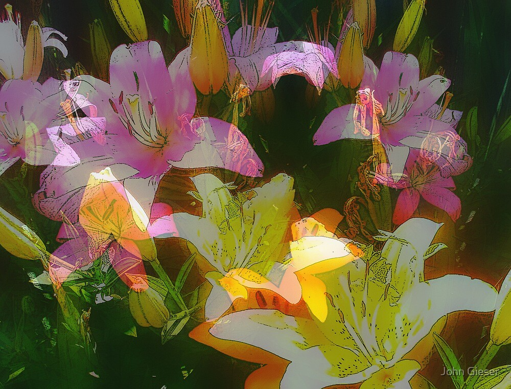 Lilies Over and Over by John Gieser