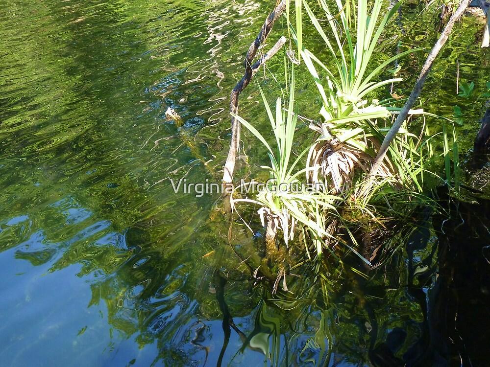 Pool abstract reeds at Wangi Falls Northern Territory by Virginia McGowan