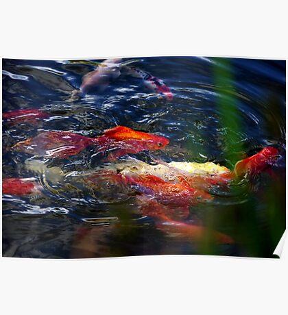 Fish dance Poster