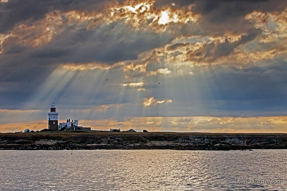 Coquet Island by David Patterson
