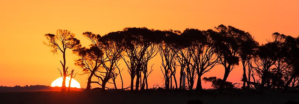 Sunset, Musselroe, Tasmania by David Jamrozik