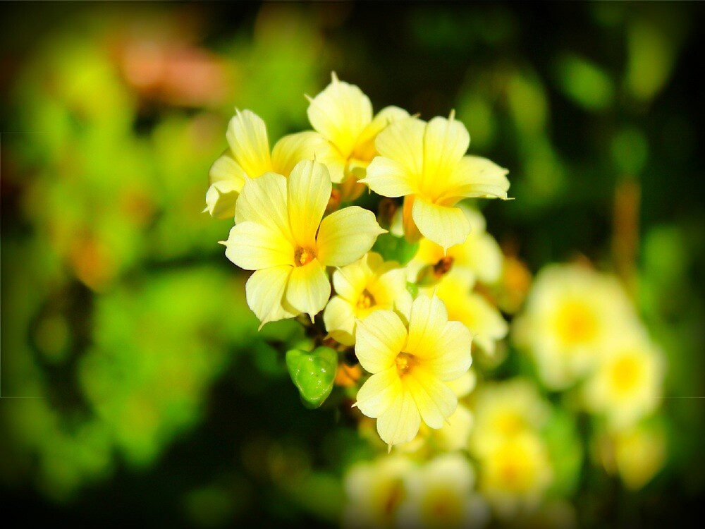 Pretty yellow blooms by Throughmyeyes13