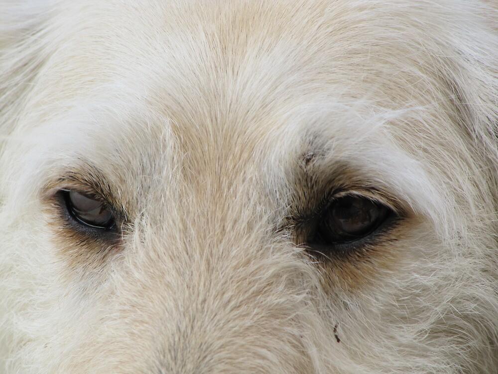 Woof! by elvines