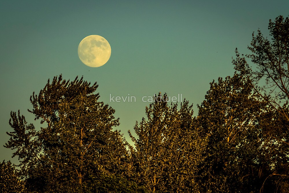 summer moon by kevin  caldwell