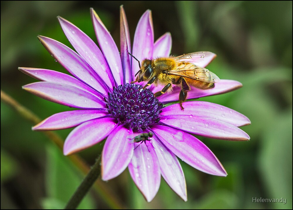The BEE and the FLY by Helenvandy