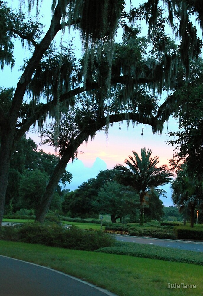 Spanish Moss at Sunset by littleflame