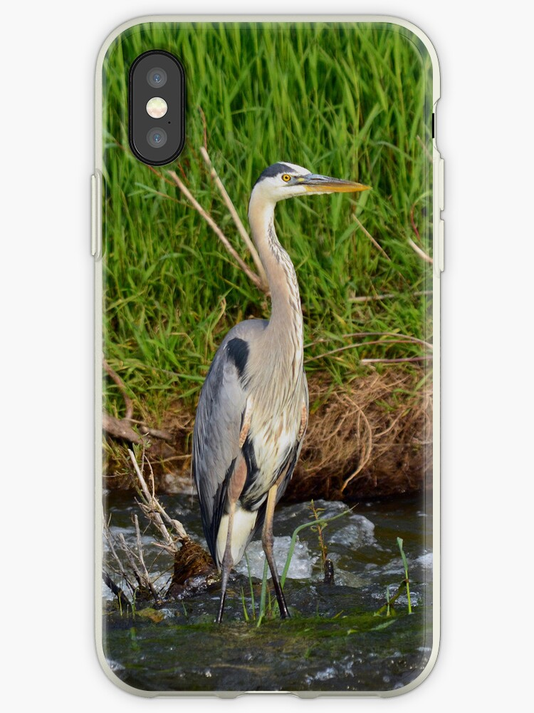 Blue Heron by Creative Captures