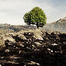 Decca fire tree by Alexander Meysztowicz-Howen