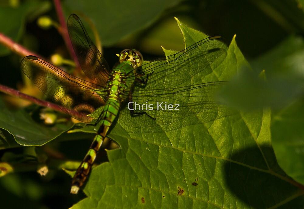 Green green green by Chris Kiez