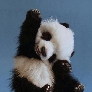 Panda by EmilyRose2205