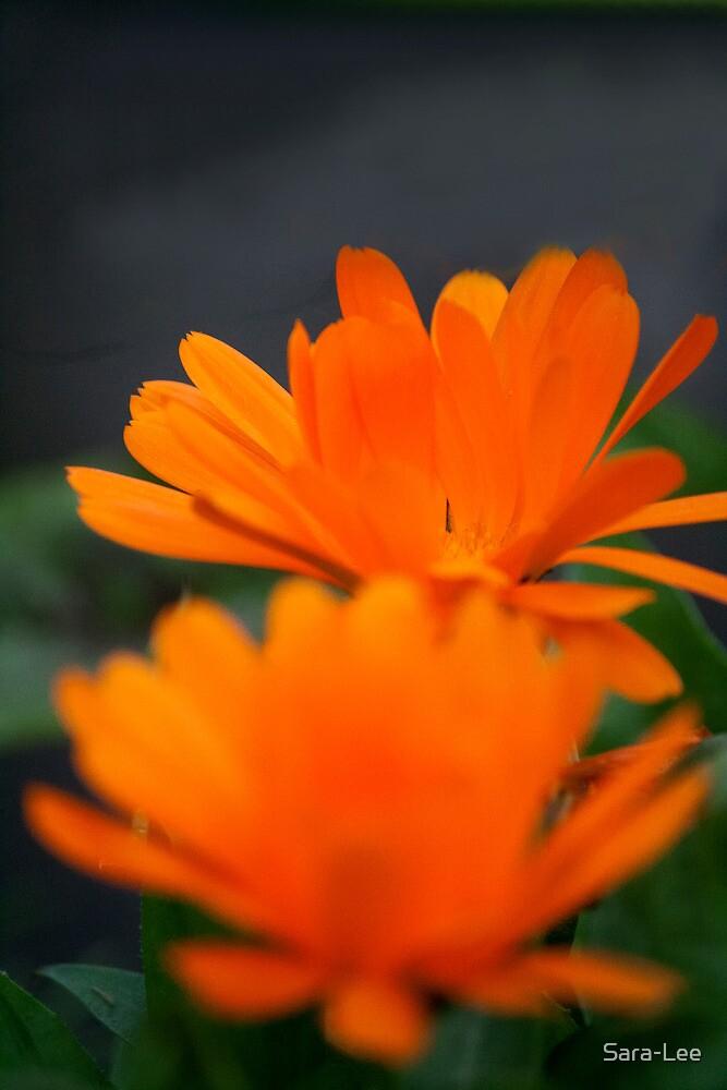 Orange Flowers by Sara-Lee
