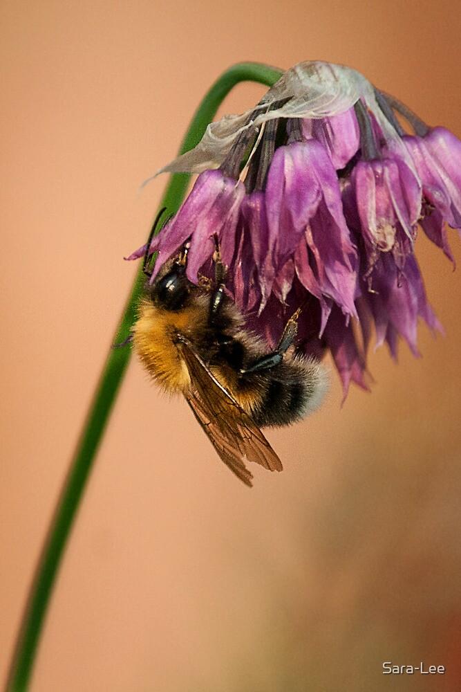 Bee on Purple Flower by Sara-Lee