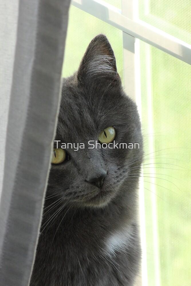 Peeping Tom by Tanya Shockman