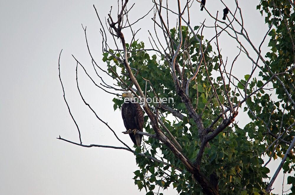 eagle recon by ewgowen