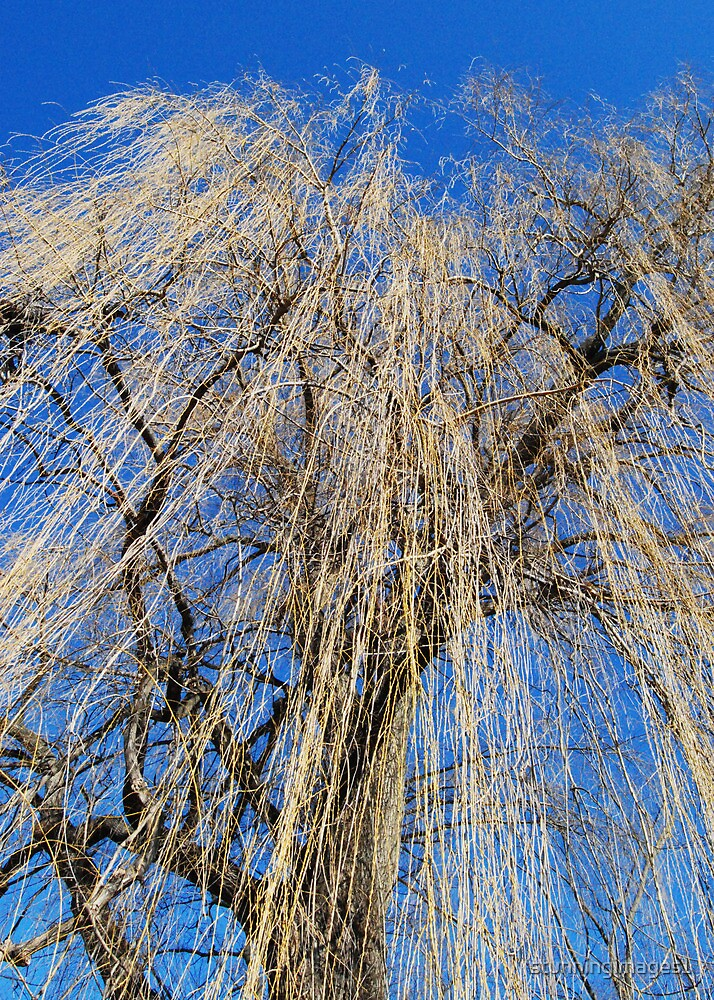 Mourning Willow by stunningimages1
