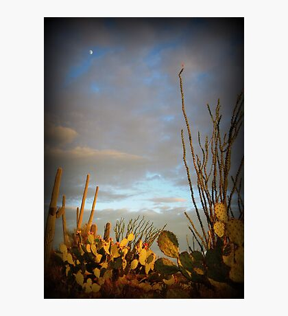 Cacti at Sunset Photographic Print