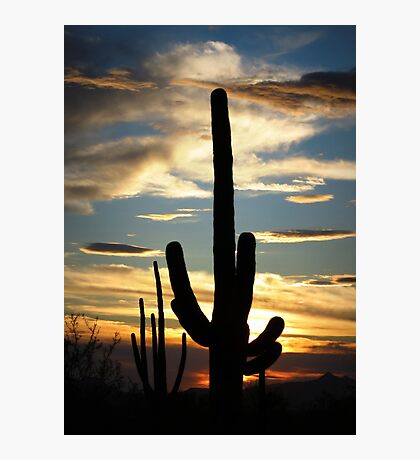 Saguaro Silhouette at Sunset  Photographic Print