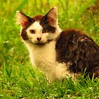 The Camp Kitty by lorilee