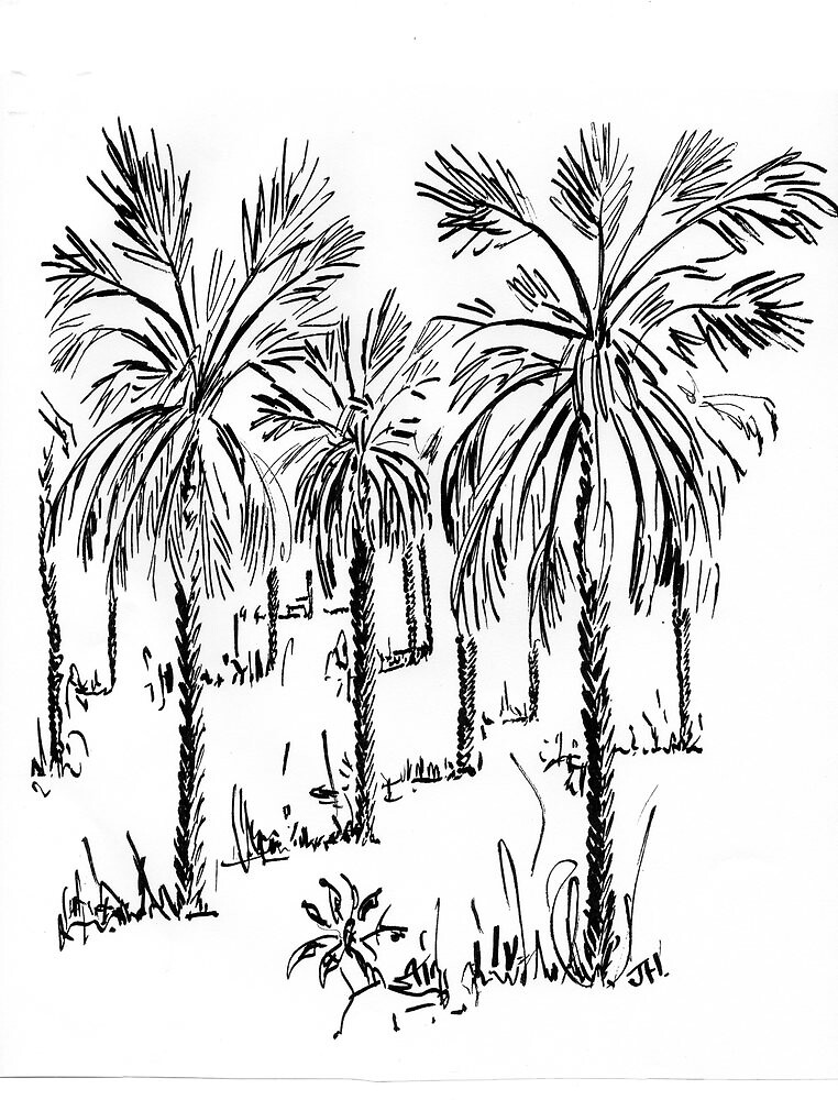 wild palms by OutlawArt