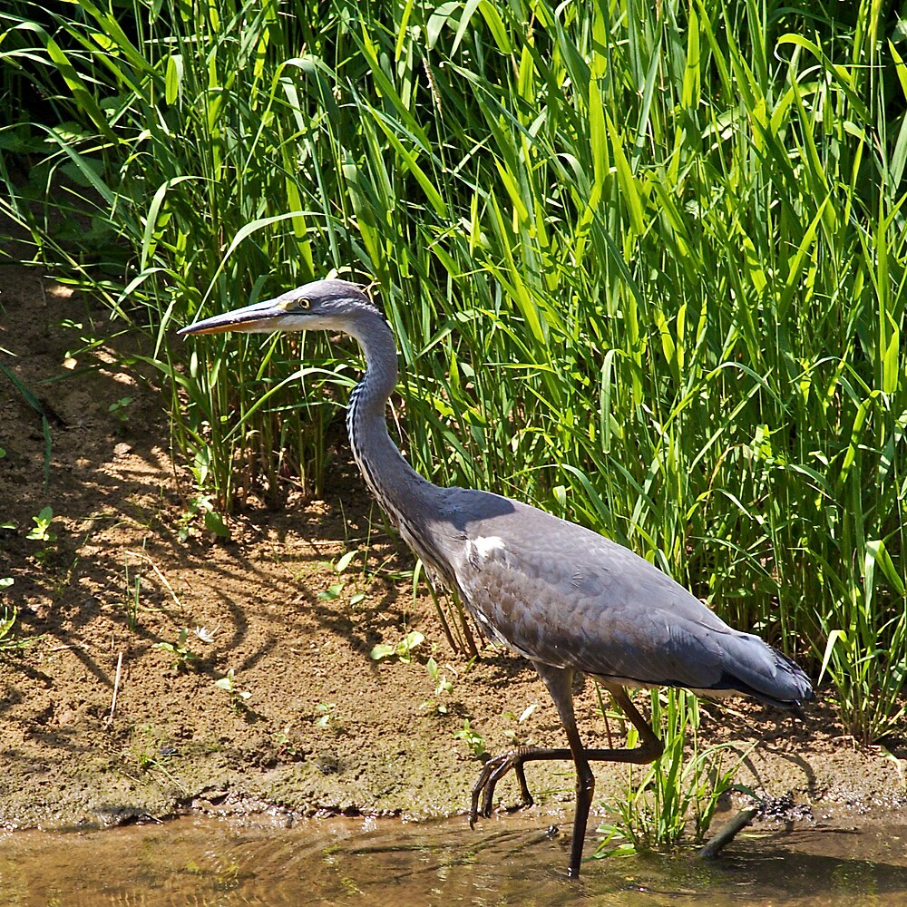 Stalking the River Wey by John Thurgood