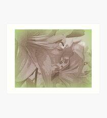 Pencil sketch lily Art Print