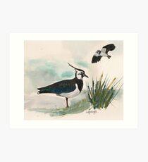 Lapwings Art Print