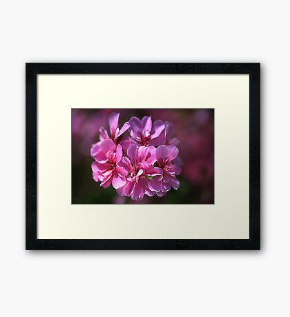 Geranium Pink Wish Framed Print