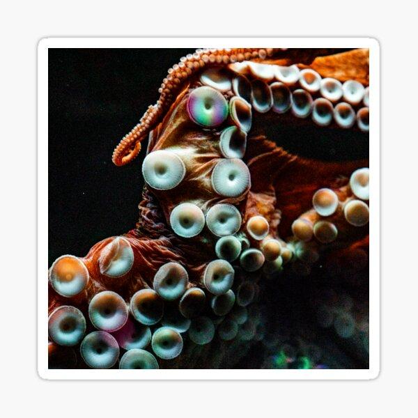 Octopus Tentacles Sticker