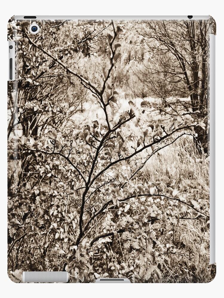 In nature. by ALEJANDRA TRIANA MUÑOZ