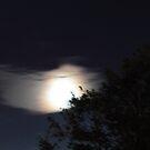 Swift Moon, RI by jroch