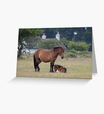 Dartmoor Pony and Foal Greeting Card