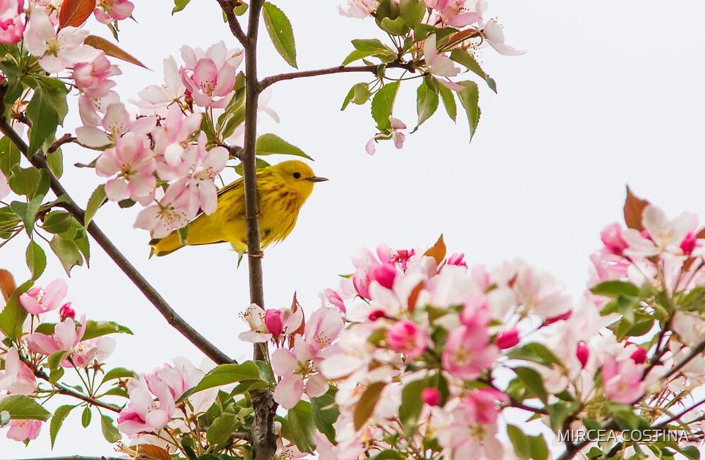 Blossom and bird by MIRCEA COSTINA