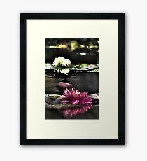 Lotus Flowers @ Dallas Arboretum Framed Print
